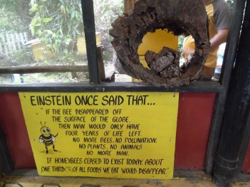 Bee Saying Einstein